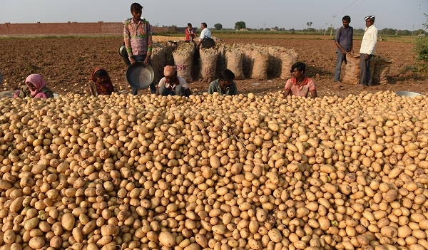 Nine farmers from Sabarkantha and Aravalli districts are being sued by PepsiCo for allegedly growing a variety of potatoes for which it has claimed Plant Variety Protection (PVP) rights (Photo: SAM PANTHAKY/AFP/Getty Images).