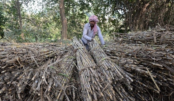 In the case of sugar, this has been achieved by keeping a lid on the price at which sugar mills which process sugarcane into the white stuff can sell their produce (Photo: SANJAY KANOJIA/AFP/Getty Images).