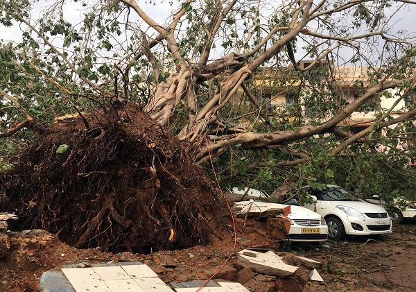 Cars are damaged by an uprooted tree in a residential area following Cyclone Fani in Bhubaneswar, capital of the eastern state of Odisha, India, May 4, 2019.  (Photo: REUTERS/Jatindra Dash    )