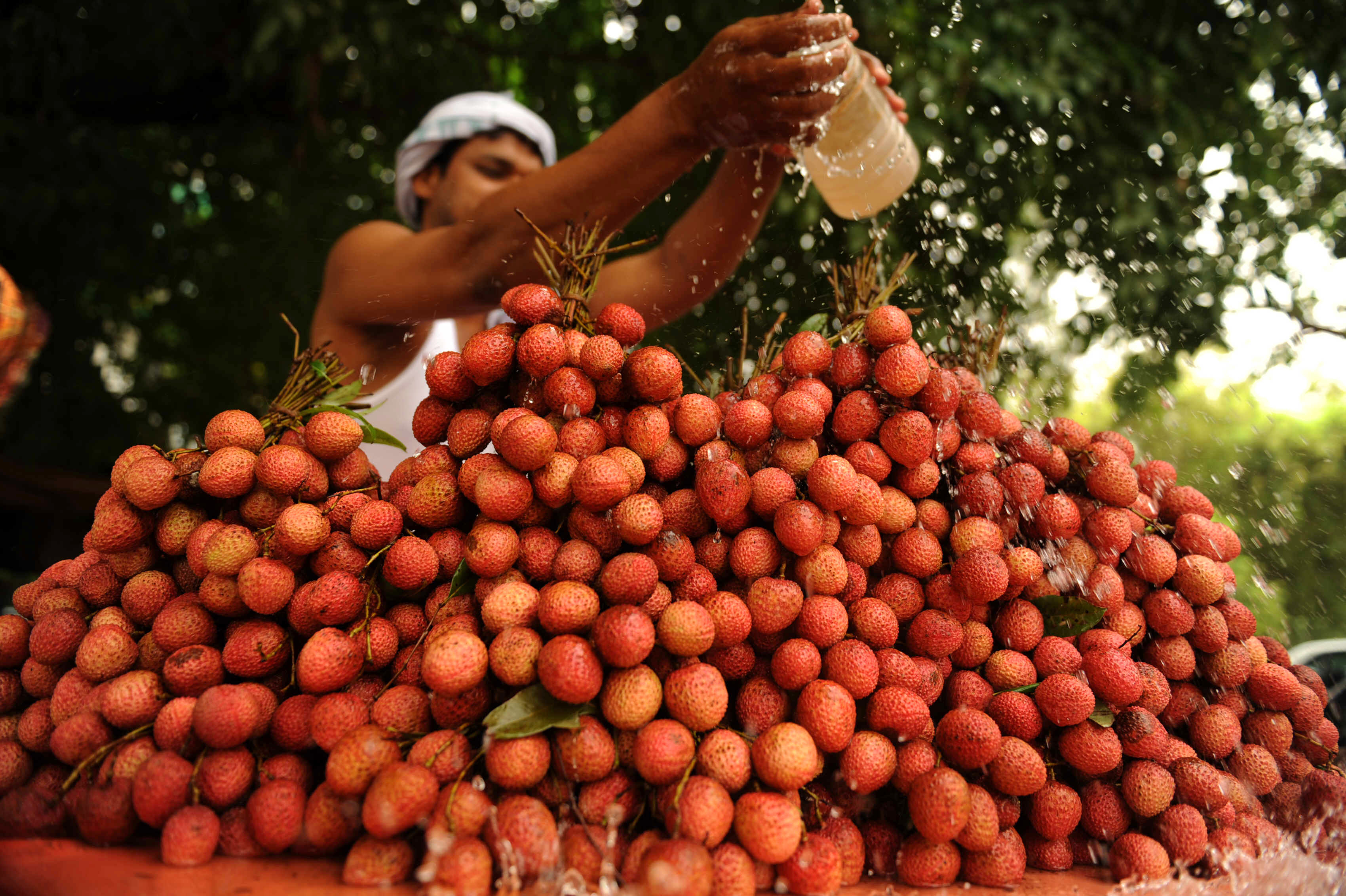 A mysterious brain fever potentially linked to lychees has killed more than one hundred children in India (Photo credit: DIPTENDU DUTTA/AFP/Getty Images)