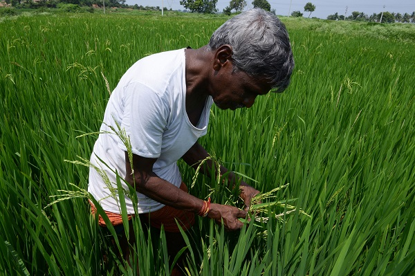 Monsoon rains are crucial for farm output and economic growth, as about 55 per cent of India's arable land is rain-fed, and agriculture forms about 15 per cent of a $2.5-trillion economy that is the third biggest in Asia (Photo: NOAH SEELAM/AFP/Getty Images).