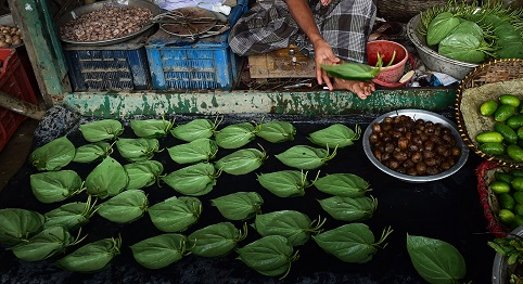 Tirur betel vine from Kerala, which is mainly cultivated in Tirur, Tanur, Tirurangadi, Kuttippuram, Malappuram, and Vengara block panchayaths of Malappuram of Kerala, is valued both for its mild stimulant action and medicinal properties (Photo: MUNIR UZ ZAMAN/AFP/Getty Images).