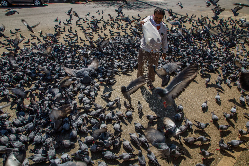 An Indian man feeds pigeons in a deserted commercial hub, as a nationwide lockdown continues in response to the coronavirus (COVID-19) outbreak on March 27, 2020 in New Delhi, India.(Photo by Yawar Nazir/Getty Images)