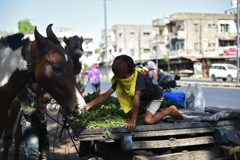 A boy feeds his a horse in Ahmedabad on May 4, 2020. (Photo by SAM PANTHAKY/AFP via Getty Images)