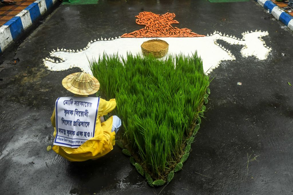 A farmer of the Trinamool Congress (TMC) arranges crops as a shape of the map of India while participating in a protest against the Indian Prime Minister Narendra Modi's government during a nationwide farmers' strike following the recent passing of agriculture bills in the Lok Sabha (lower house), in  Kolkata on September 25, 2020. (Photo by DIBYANGSHU SARKAR/AFP via Getty Images)