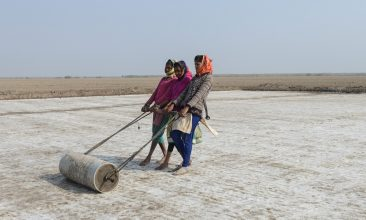 FEATURES - This picture taken on January 8, 2021 shows labourers pulling a roller to level the land on a salt pan at the Little Rann of Kutch (LRK) region near Kharaghoda village, some 150 km from Ahmedabad. - Roshni Thakor left school to harvest salt from a sweltering sun-baked Indian desert, a backbreaking trade practiced by her ancestors for centuries but now threatened by runaway climate change. - TO GO WITH: India-climate-environment-economy-salt, by Abhaya SRIVASTAVA (Photo by SAM PANTHAKY / AFP) / TO GO WITH: India-climate-environment-economy-salt, by Abhaya SRIVASTAVA (Photo by SAM PANTHAKY/AFP via Getty Images)